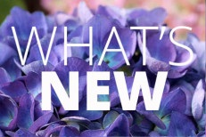 what_new